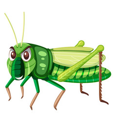 a green grasshopper on white background vector image