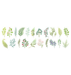 botanic elements trendy wild flowers and branches vector image