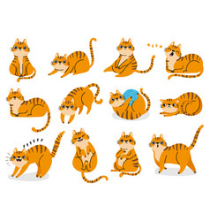 cat poses cartoon red fat striped cats emotions vector image