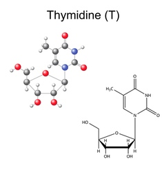 Chemical formula and model of thymidine vector image