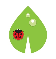 Flat leaf with drops of dew and ladybird vector