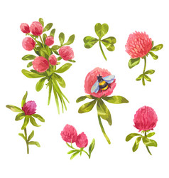 hand-drawn watercolor clover vector image