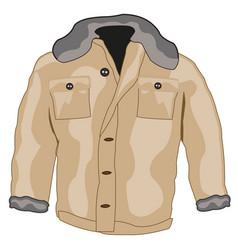 Jacket male winter vector