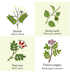 Set edible and medicinal plants vector