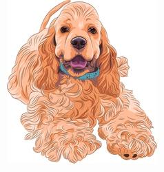 Cute sporting dog breed american cocker spaniel vector