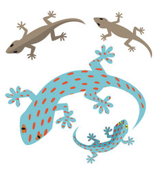 Home lizard and gecko lizard in flat vector