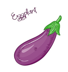 isolated cartoon fresh hand drawn eggplant vector image vector image