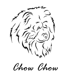 Chow Chow vector image vector image