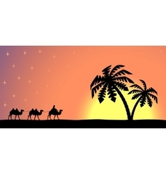 Man with camels at sunset vector image