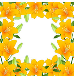 orange lily border on white background vector image