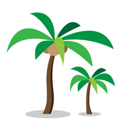Two coconut trees with coconut vector