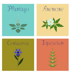 Assembly flat plantago anemone vector