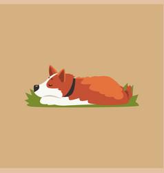 colorful with cute sleeping corgi vector image vector image