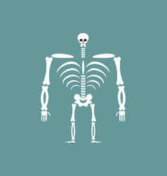 human skeleton isolated skull and bones spine and vector image