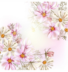 Beautiful with field cosmos flowers vector