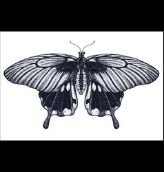 butterfly tattoo sketch tropical butterfly vector image