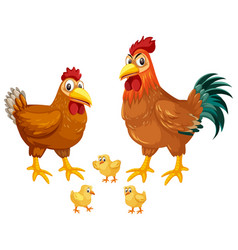 set of chickens white background vector image