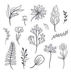 set of leaves and plants vector image