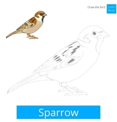 Sparrow bird learn to draw vector image