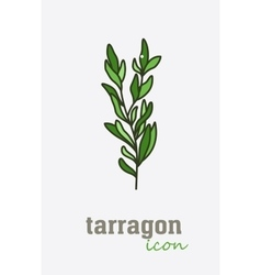 Tarragon icon Vegetable green leaves vector image