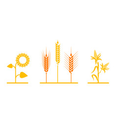 fields of sunflowers wheat and corn vector image vector image