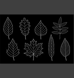 art chalk set of hand drawn leaves vector image