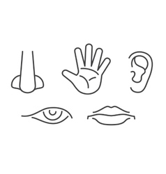 Five senses icons set isolated white vector