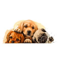 puppies king charles spaniel labrador and pug vector image