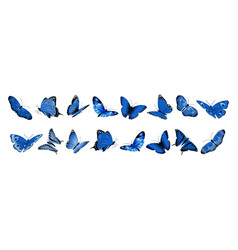 realistic blue butterflies flying butterfly vector image