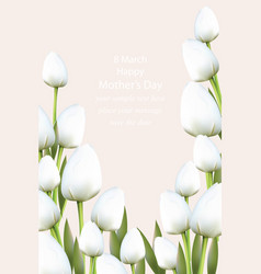 White tulips flowers blossom vector