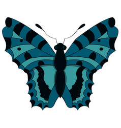 blue butterfly drawing by vector image