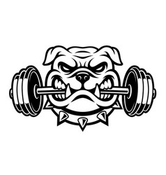 Black and white of a bulldog with dumbbell vector