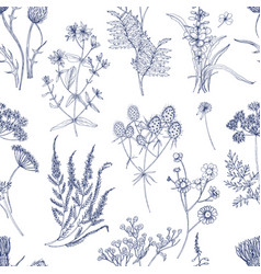 Botanical seamless pattern with meadow herbs vector