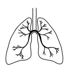 Hand drawn lungs doodle style internal organs vector