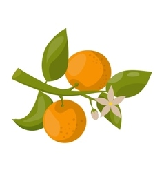 Orange branch isolated vector