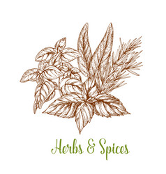 spices and herbs seasonings sketch vector image