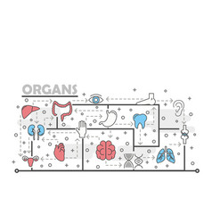 thin line art human organs poster banner vector image