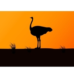 silhouette ostrich on background of sunset vector image vector image