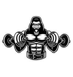 A gorilla bodybuilder with dumbbells vector