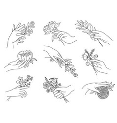 hands holding flowers outline female hand with vector image