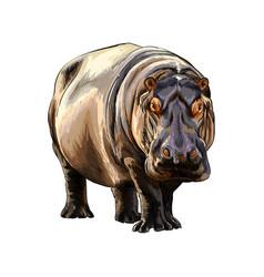 hippopotamus from a splash watercolor colored vector image