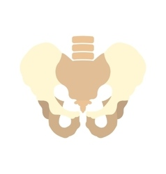 Human pelvis icon vector image