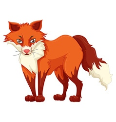 Red fox standing on white background vector image