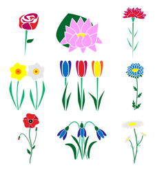 set of the most common flowers vector image