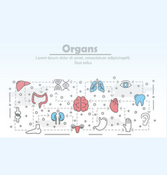 thin line art human organs poster banner vector image