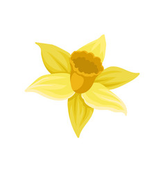 Flat icon of daffodil narcissus with vector