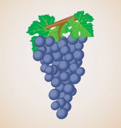 grape fruit vector image