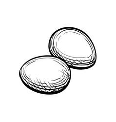 Hand drawn eggs vector