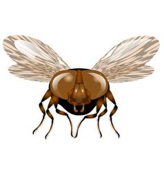 macro fly vector image