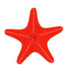 Red sea star fish vector
